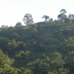 Kerala Wildlife