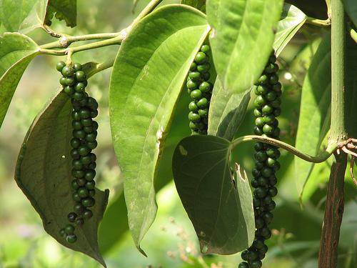 Spice Plantations Kerala